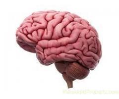 http://www.fitnespharma.com/vito-brain/